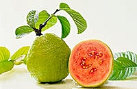 Guava – benefits